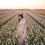 netherlands-blumenfeld-flowers-sunrise