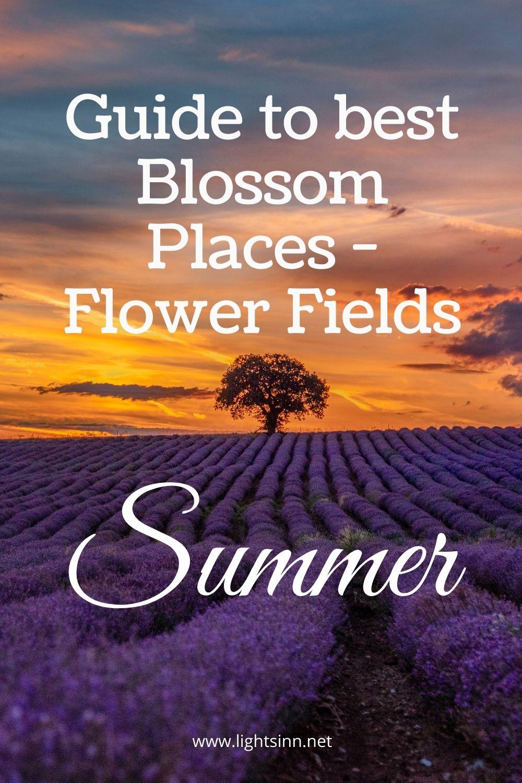 best-blossom-bloom-flowerfield-summer-lavender