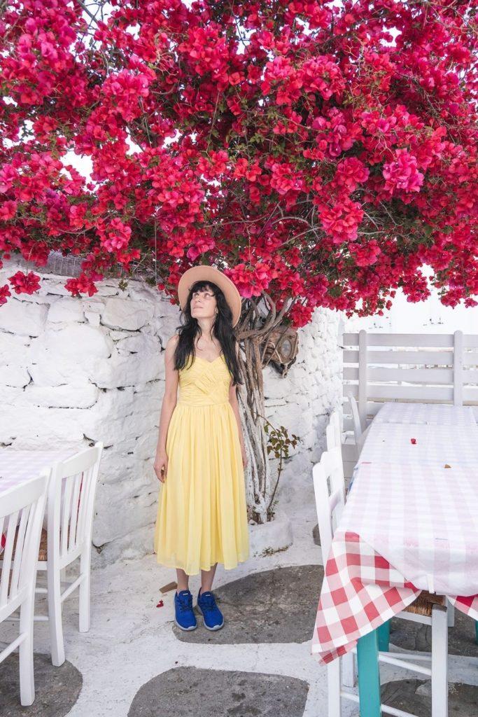 blumenfelder-bloom-blossom-pink-flowers