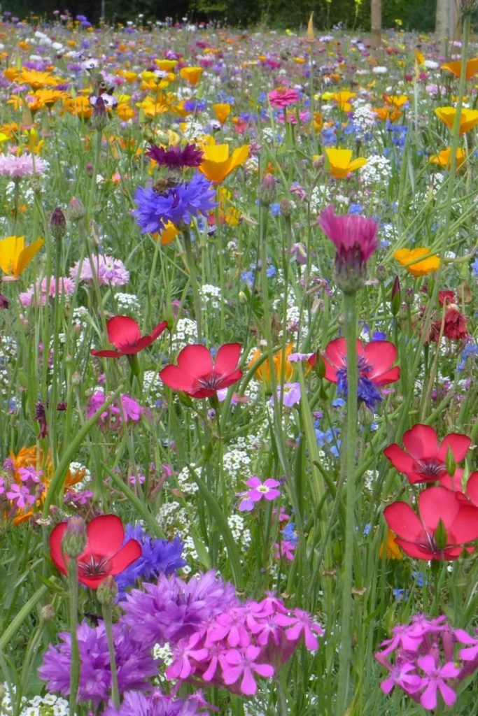 blumenfelder-blumenwiese-confetti-wildflowers-flowerfield
