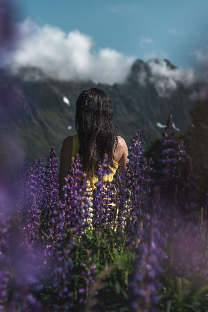blumenfelder-lupines-lupinen-purple-flowerfield