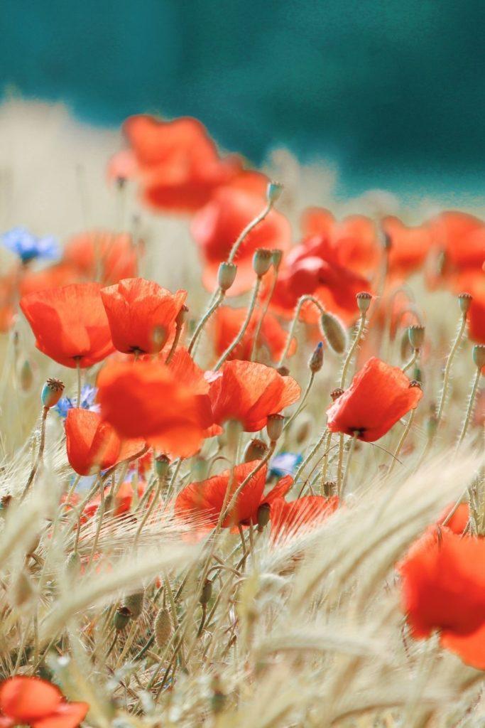 blooming-spring-blumen-summer-fall-winter