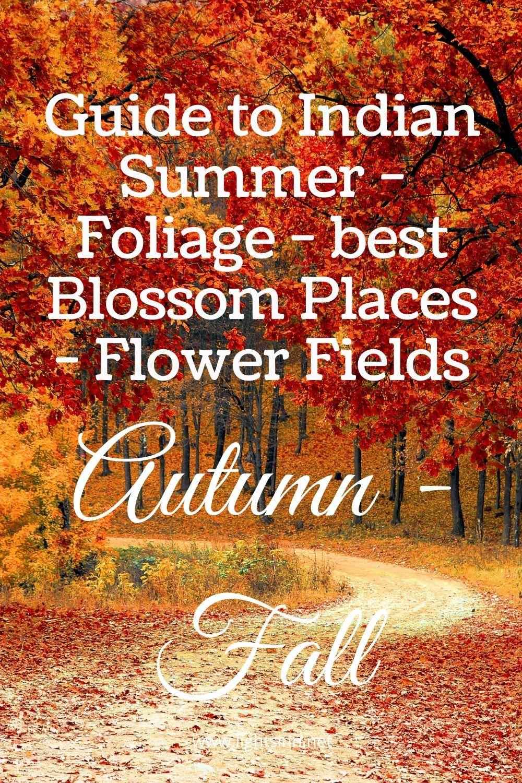 fall-indian-summer-herbst-foliage-autumn