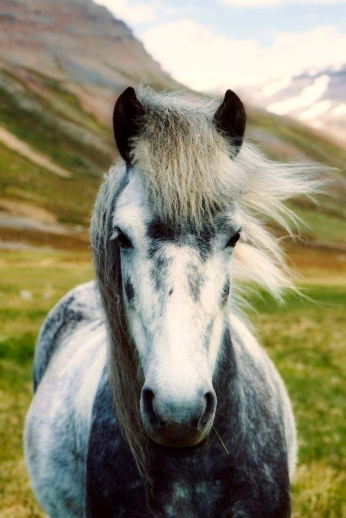 iceland-landmannalaugar-highlands-icelandhorse-pferd