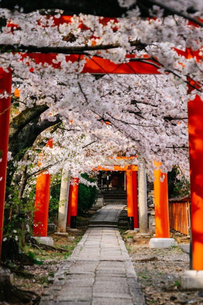 spring-travel-destination-japan-sakura-cherry-bloom