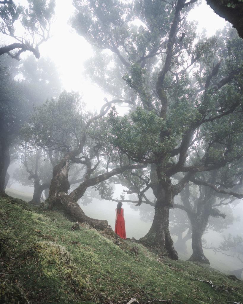madeira-fairy-tale-foggy-forest
